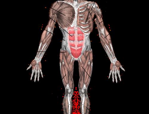 Мускулна дистрофия: как могат да помогнат стволовите клетки?